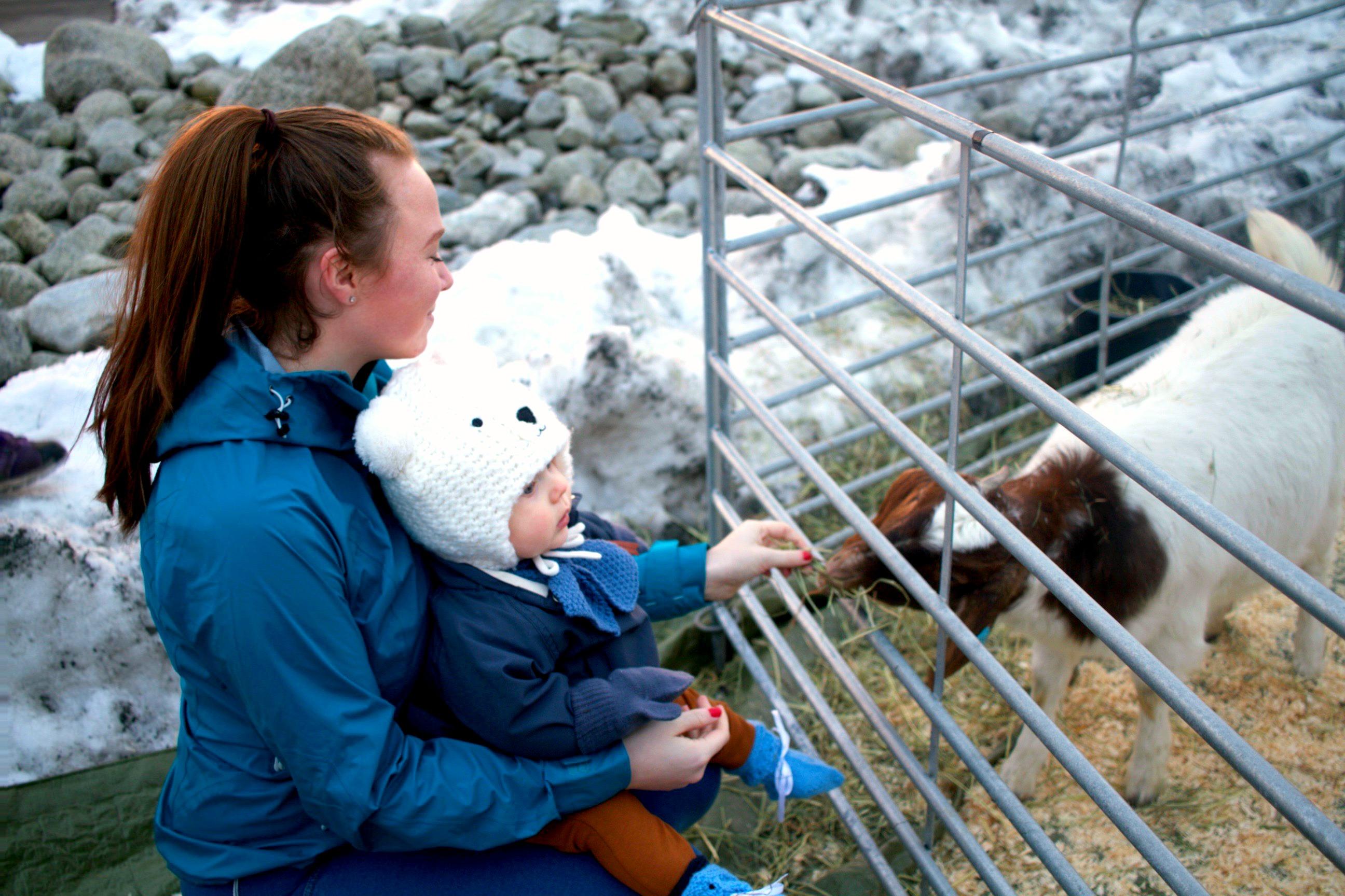 geitene på farmen 2018